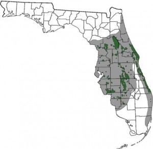Map of Florida Scrub-Jay Range
