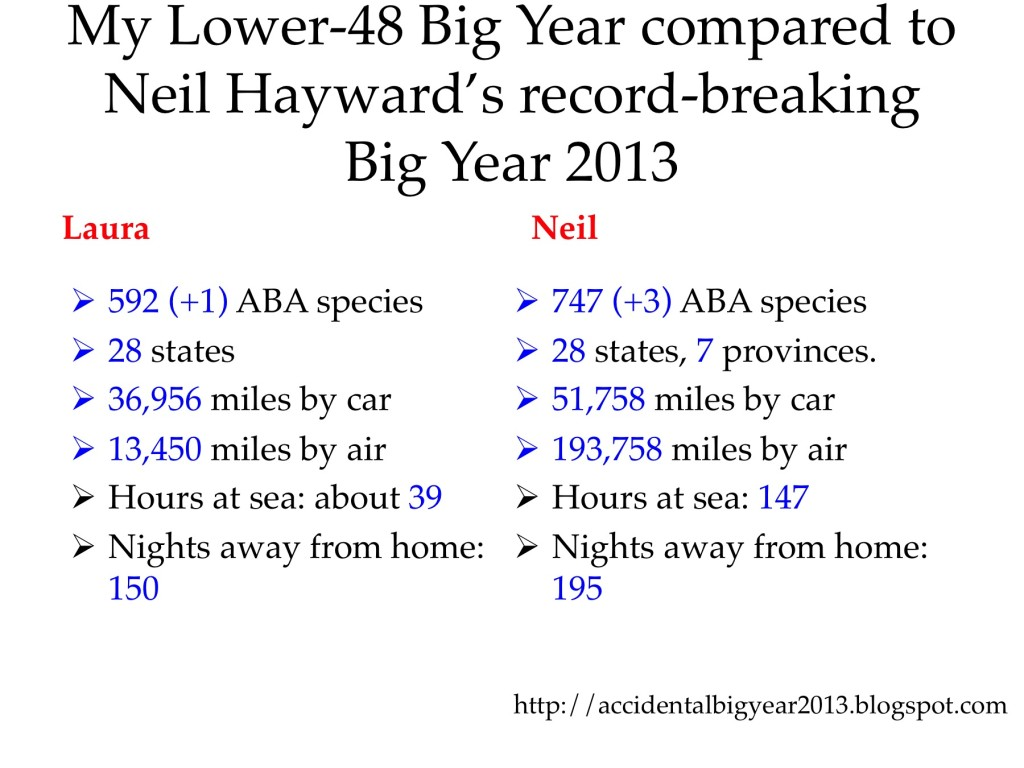 Laura's totals compared to Neil Hayward's for our 2013 Big Years.